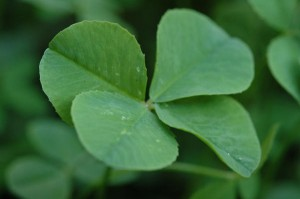 four-leaf-clover-068_l